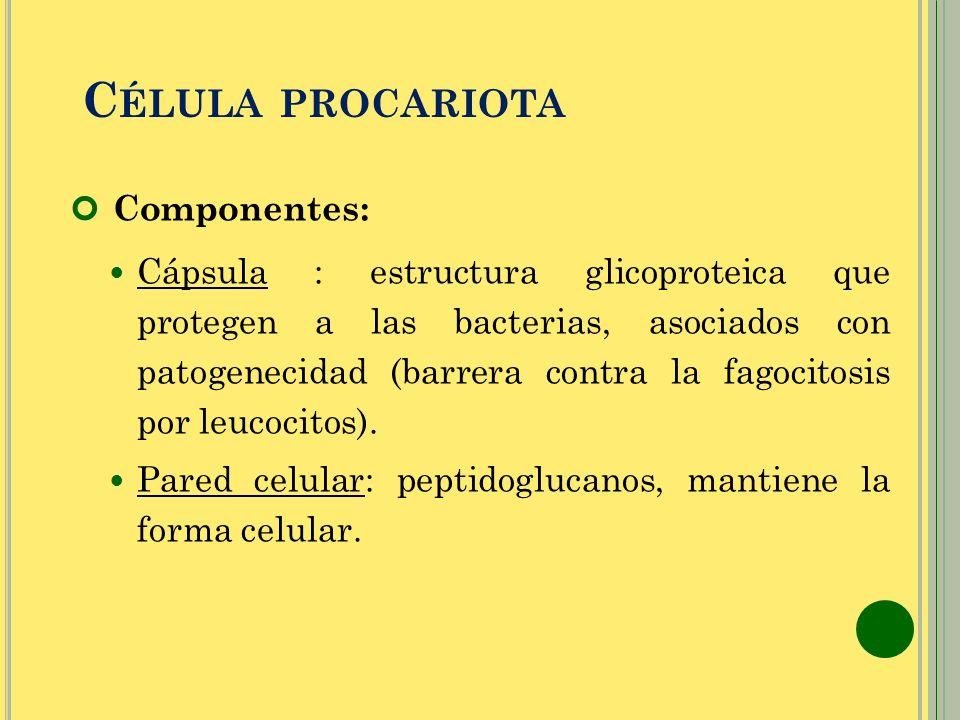Célula procariota Componentes: