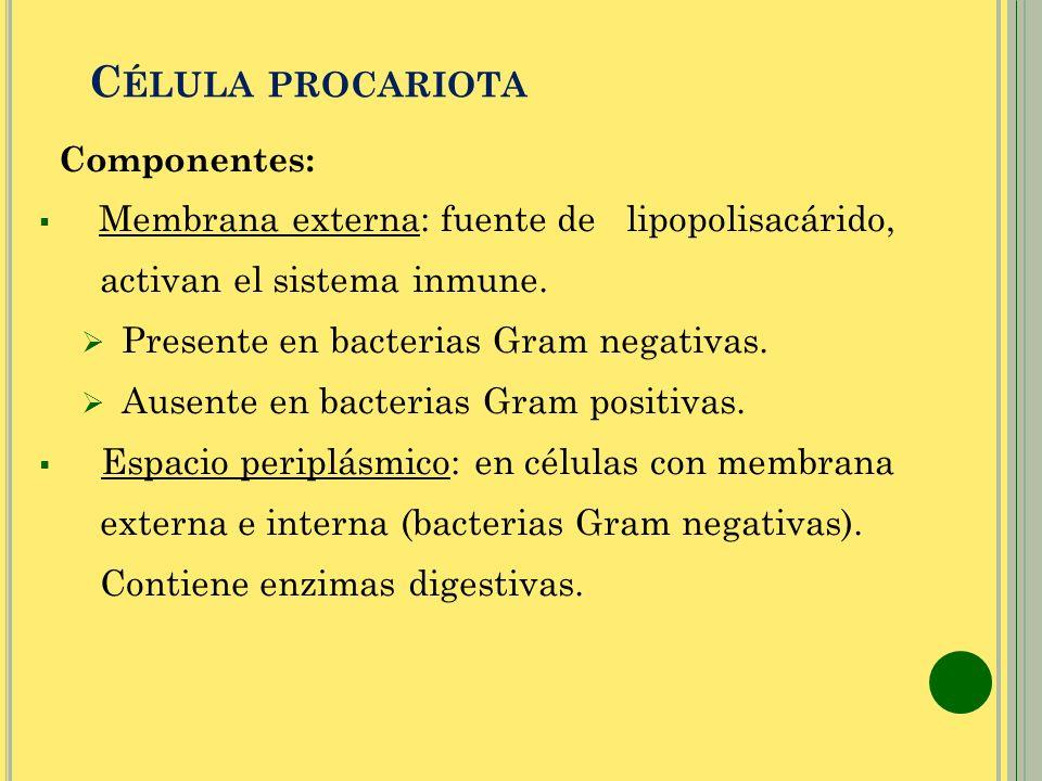 Célula procariota activan el sistema inmune.