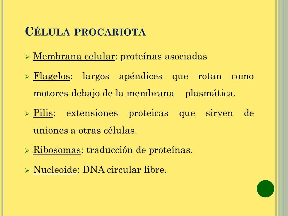 Célula procariota Membrana celular: proteínas asociadas