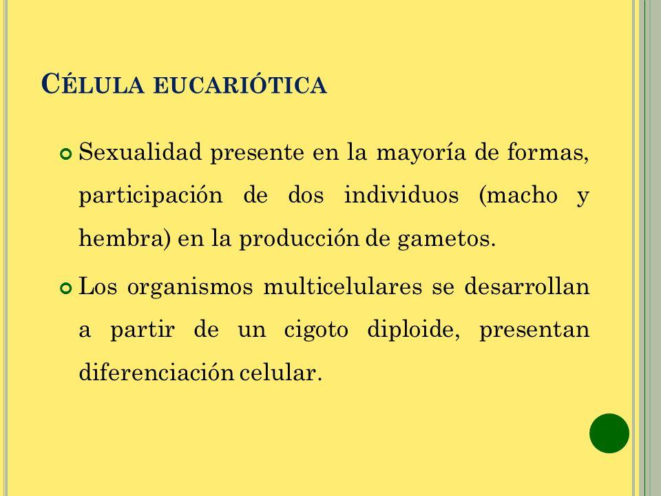 Célula eucariótica Sexualidad presente en la mayoría de formas, participación de dos individuos (macho y hembra) en la producción de gametos.