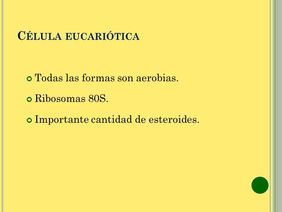 Célula eucariótica Todas las formas son aerobias. Ribosomas 80S.