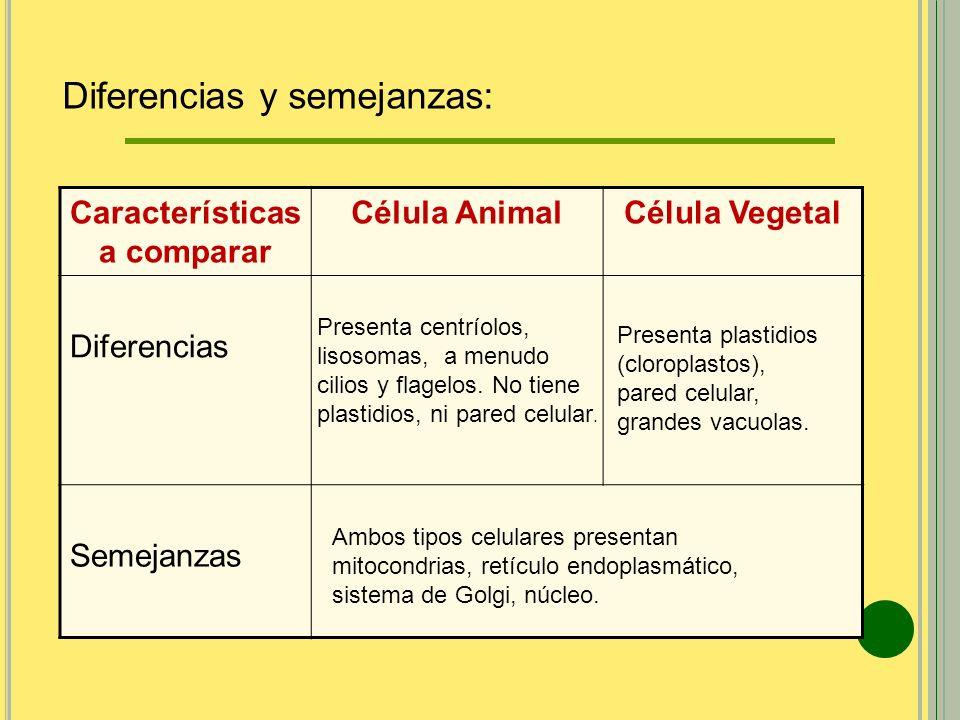 Características a comparar