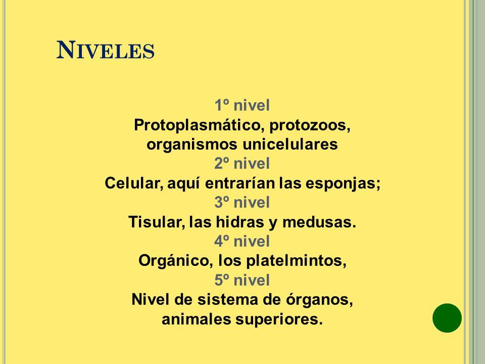 Niveles 1º nivel Protoplasmático, protozoos, organismos unicelulares