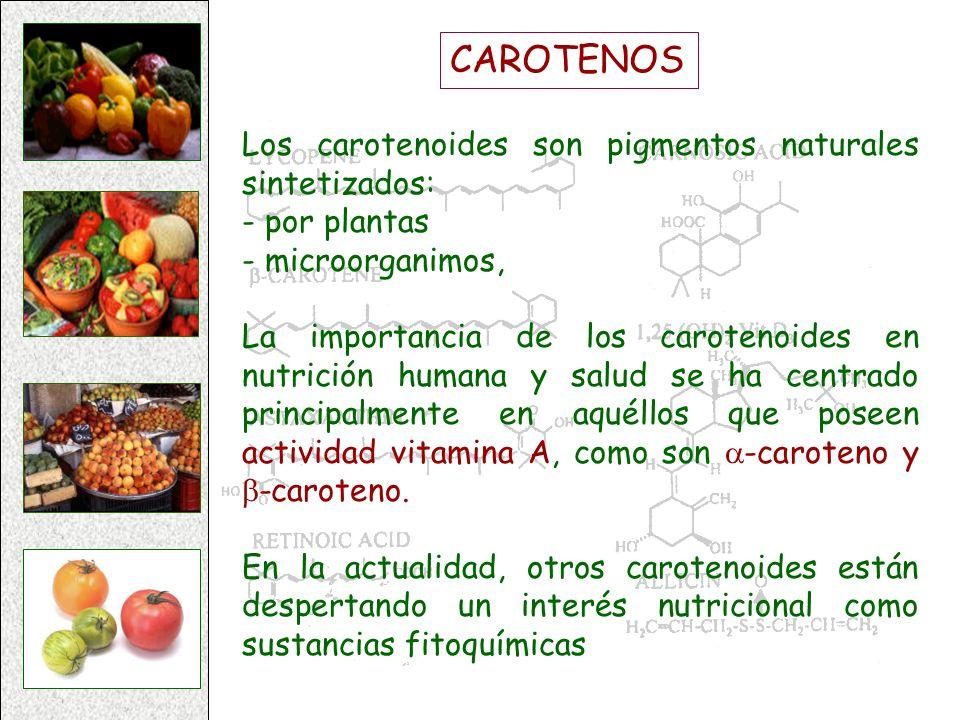 CAROTENOS Los carotenoides son pigmentos naturales sintetizados: