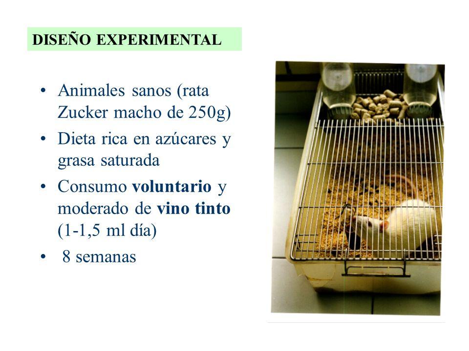 Animales sanos (rata Zucker macho de 250g)