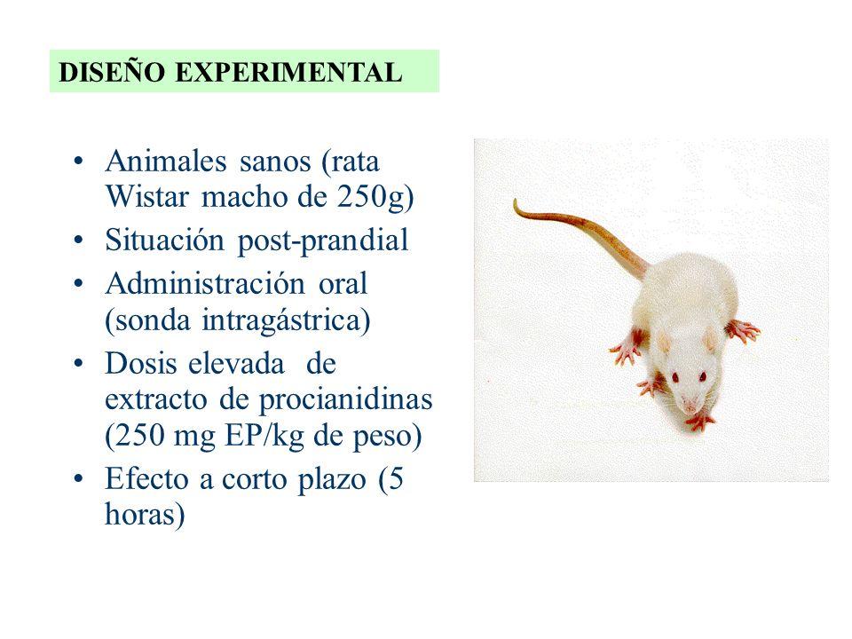 Animales sanos (rata Wistar macho de 250g) Situación post-prandial