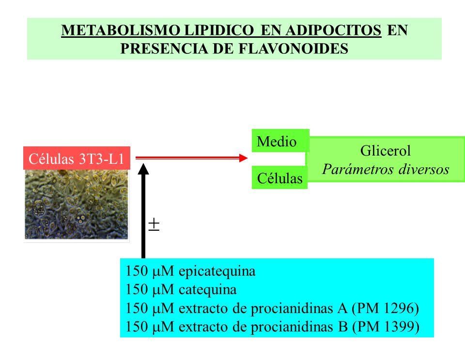 METABOLISMO LIPIDICO EN ADIPOCITOS EN PRESENCIA DE FLAVONOIDES