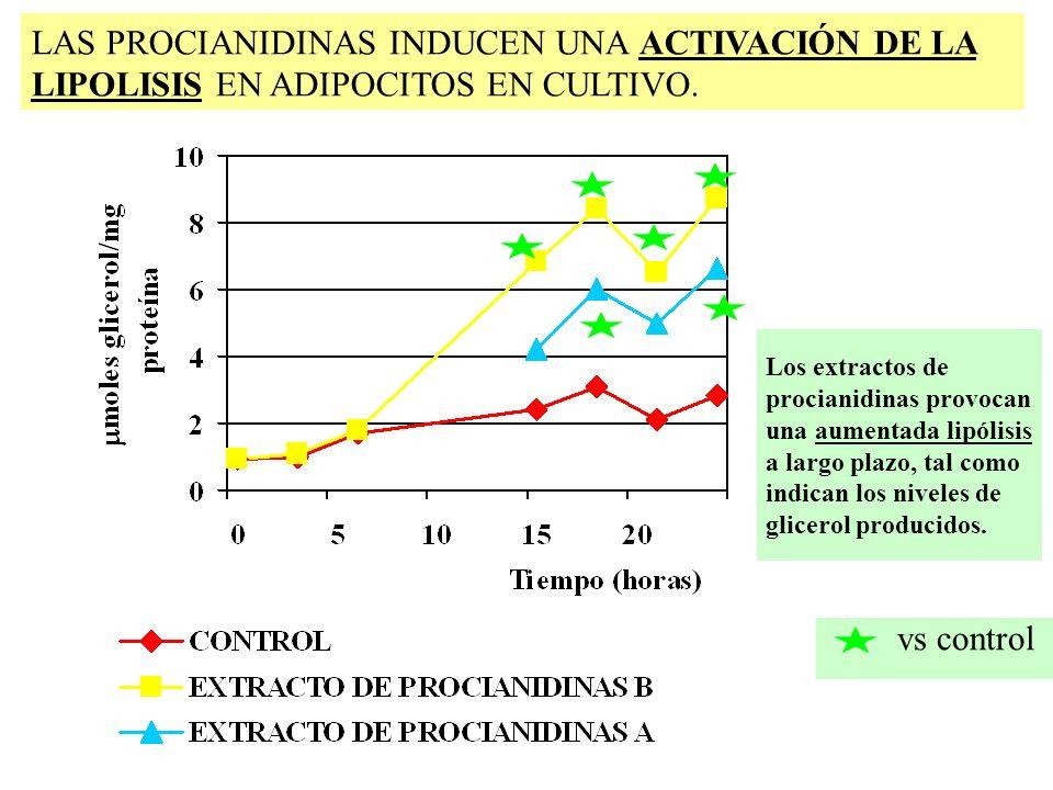 LAS PROCIANIDINAS INDUCEN UNA ACTIVACIÓN DE LA LIPOLISIS EN ADIPOCITOS EN CULTIVO.