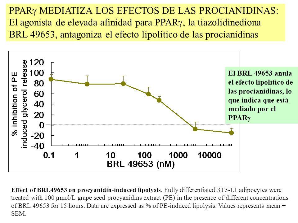 PPARg MEDIATIZA LOS EFECTOS DE LAS PROCIANIDINAS: El agonista de elevada afinidad para PPARg, la tiazolidinediona BRL 49653, antagoniza el efecto lipolítico de las procianidinas