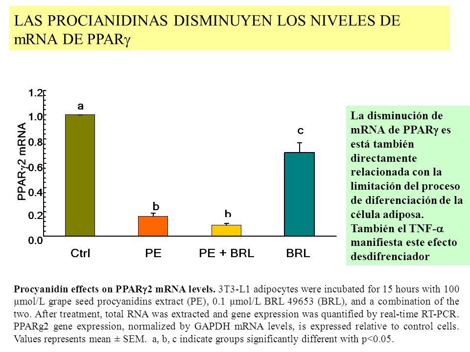 LAS PROCIANIDINAS DISMINUYEN LOS NIVELES DE mRNA DE PPARg