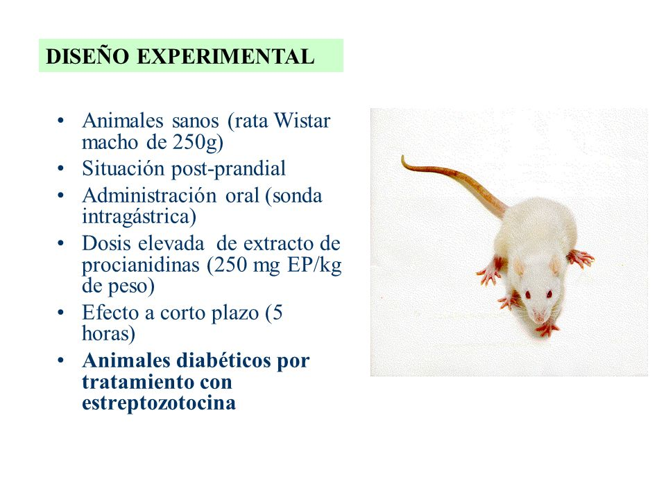 DISEÑO EXPERIMENTAL Animales sanos (rata Wistar macho de 250g) Situación post-prandial. Administración oral (sonda intragástrica)