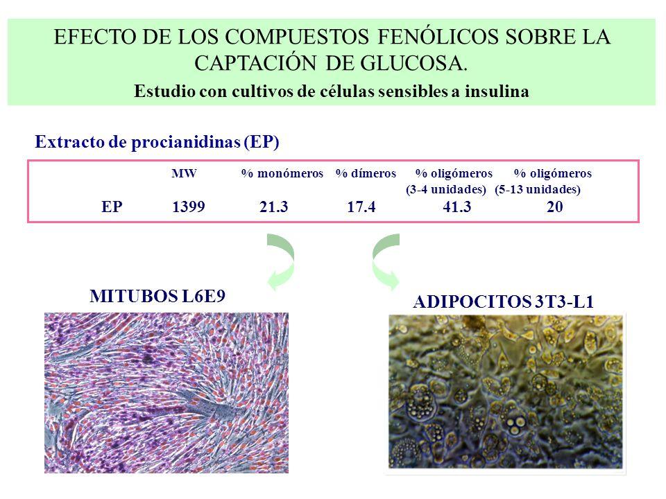 Estudio con cultivos de células sensibles a insulina