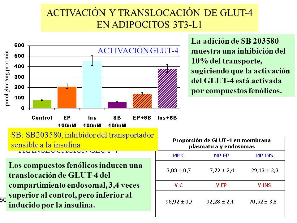 ACTIVACIÓN Y TRANSLOCACIÓN DE GLUT-4 EN ADIPOCITOS 3T3-L1