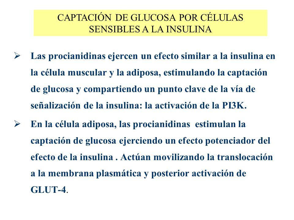CAPTACIÓN DE GLUCOSA POR CÉLULAS SENSIBLES A LA INSULINA