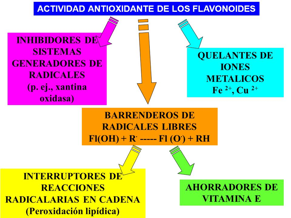 ACTIVIDAD ANTIOXIDANTE DE LOS FLAVONOIDES