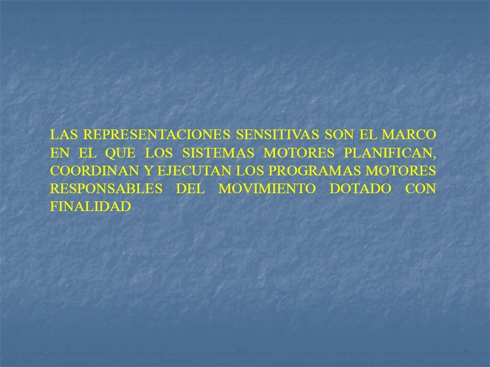 LAS REPRESENTACIONES SENSITIVAS SON EL MARCO EN EL QUE LOS SISTEMAS MOTORES PLANIFICAN, COORDINAN Y EJECUTAN LOS PROGRAMAS MOTORES RESPONSABLES DEL MOVIMIENTO DOTADO CON FINALIDAD