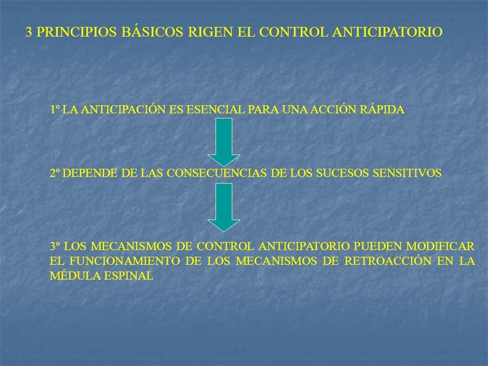 3 PRINCIPIOS BÁSICOS RIGEN EL CONTROL ANTICIPATORIO