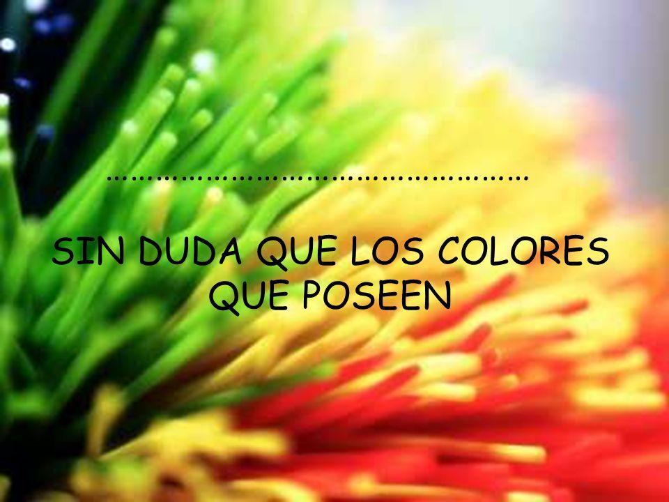 Sin duda que los colores que poseen