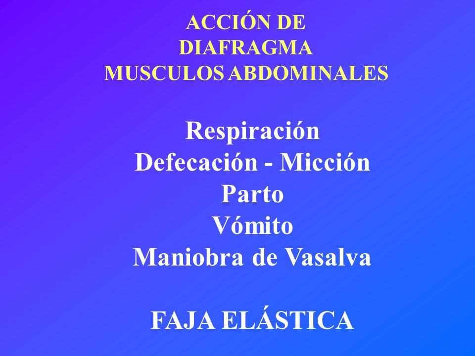 Respiración Defecación - Micción Parto Vómito Maniobra de Vasalva