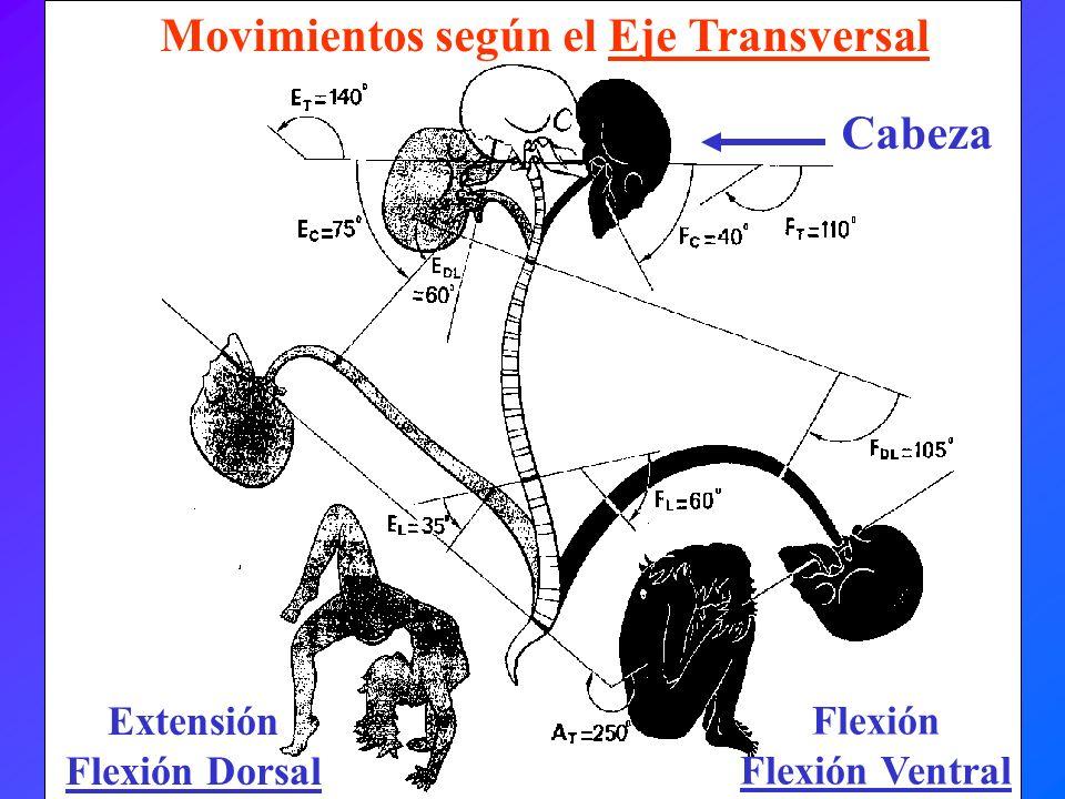 Movimientos según el Eje Transversal