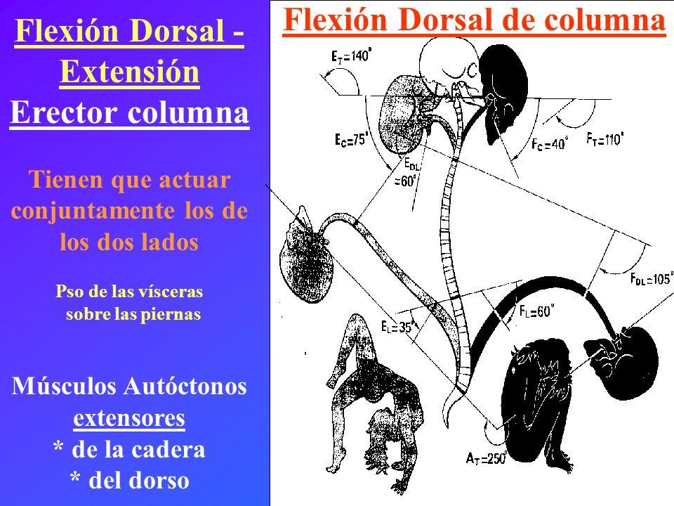 Flexión Dorsal - Extensión Erector columna Flexión Dorsal de columna