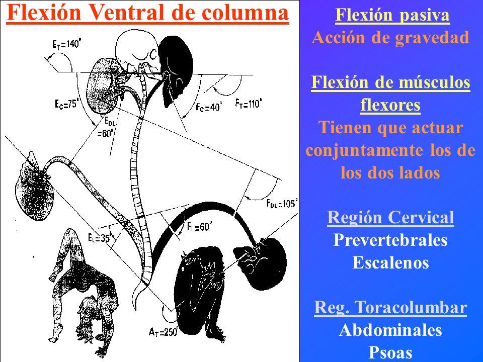 Flexión Ventral de columna