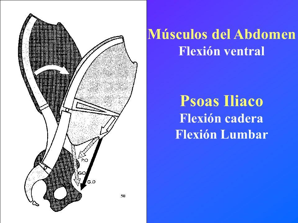 Psoas Iliaco Músculos del Abdomen Flexión ventral Flexión cadera