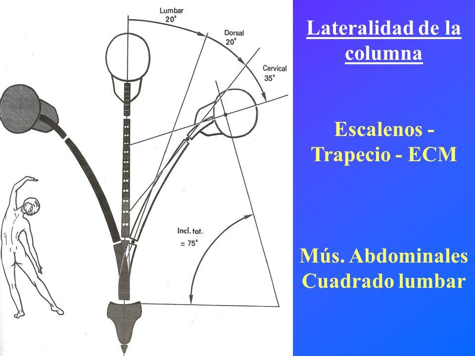 Lateralidad de la columna Escalenos - Trapecio - ECM
