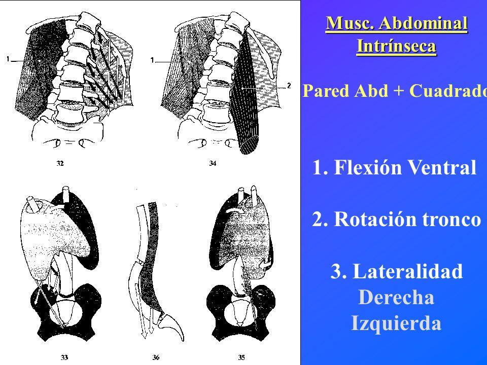 1. Flexión Ventral 2. Rotación tronco 3. Lateralidad Derecha Izquierda