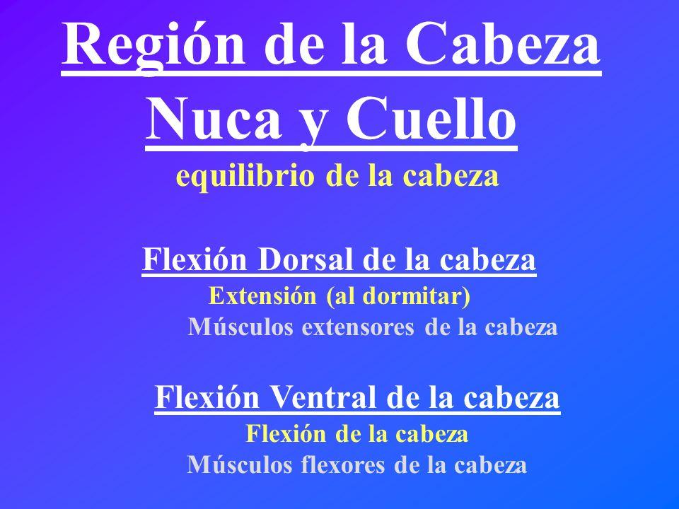 Región de la Cabeza Nuca y Cuello