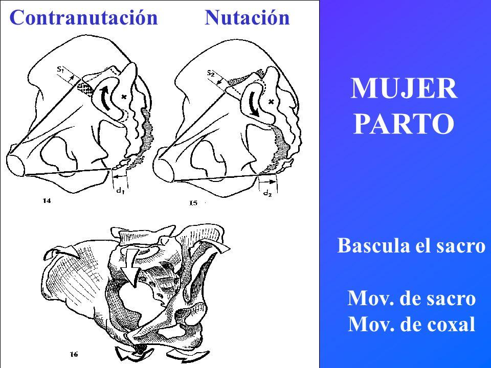Contranutación Nutación