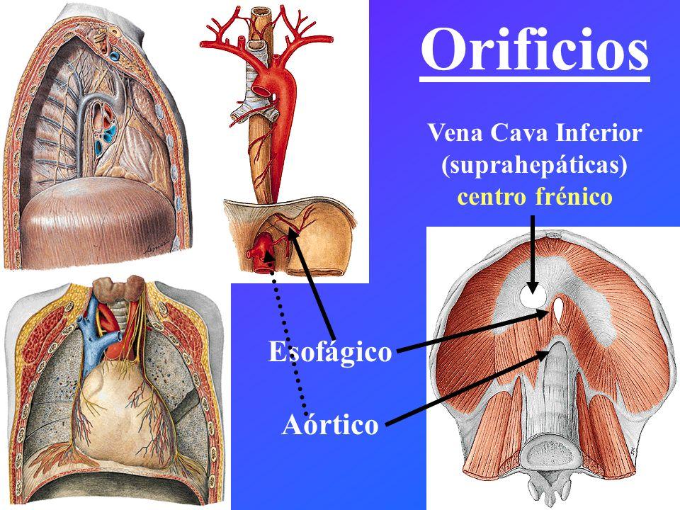 Orificios Esofágico Aórtico Vena Cava Inferior (suprahepáticas)