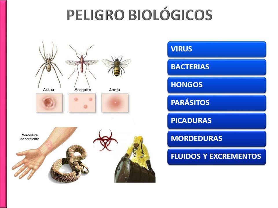 PELIGRO BIOLÓGICOS VIRUS BACTERIAS HONGOS PARÁSITOS PICADURAS