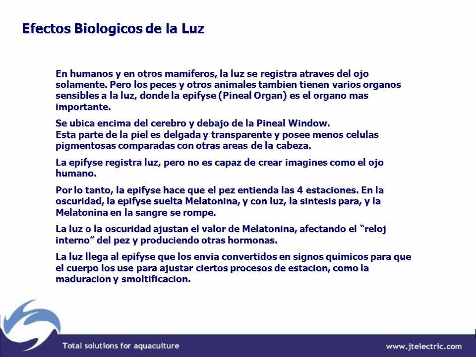 Efectos Biologicos de la Luz
