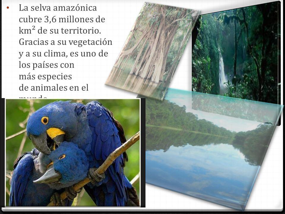 La selva amazónica cubre 3,6 millones de km² de su territorio