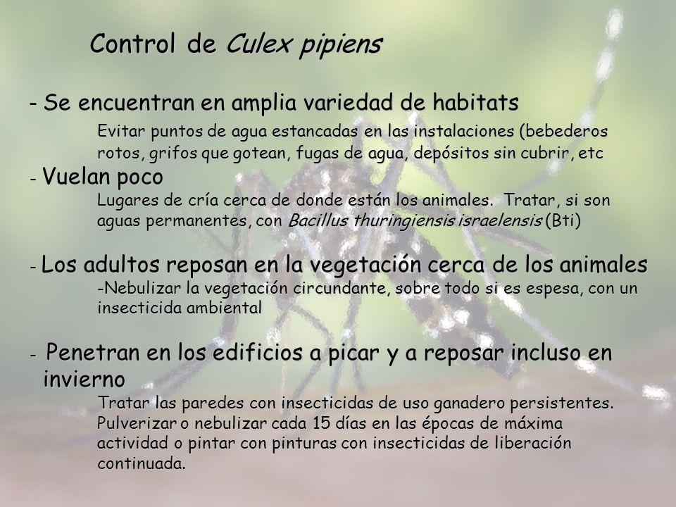 Control de Culex pipiens