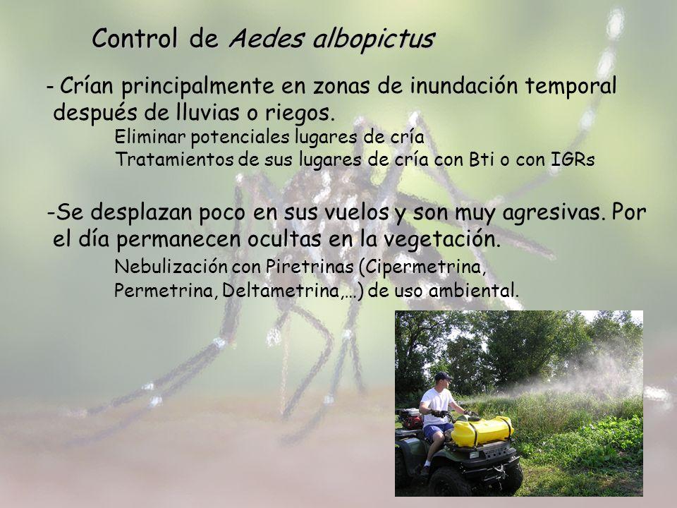 Control de Aedes albopictus