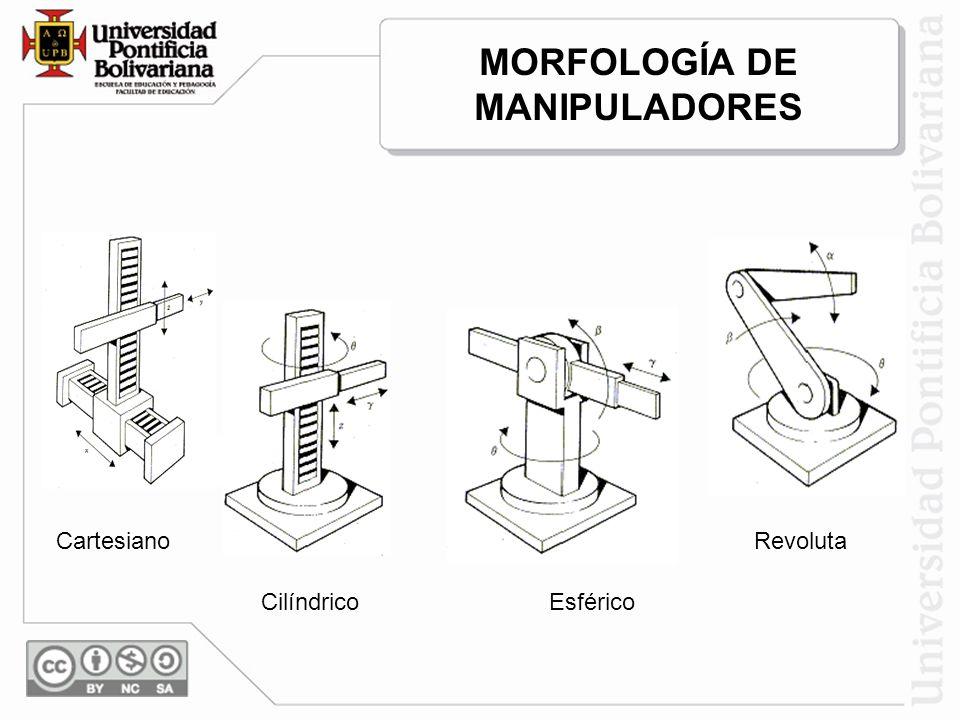 MORFOLOGÍA DE MANIPULADORES