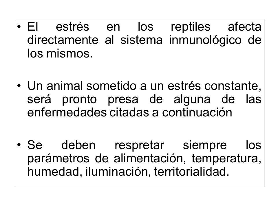 El estrés en los reptiles afecta directamente al sistema inmunológico de los mismos.