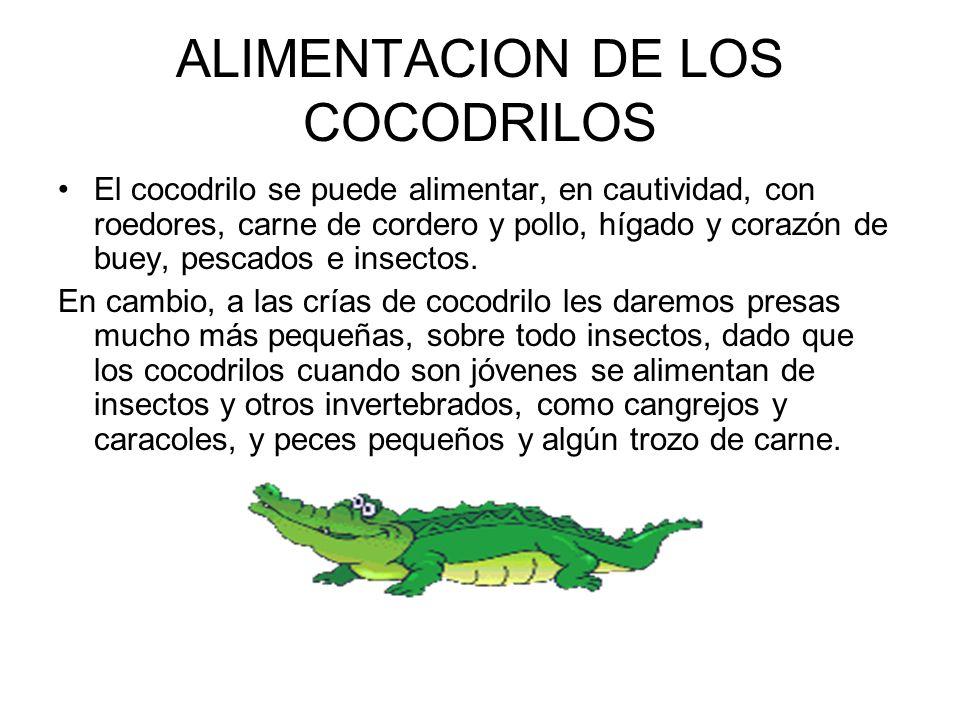 ALIMENTACION DE LOS COCODRILOS