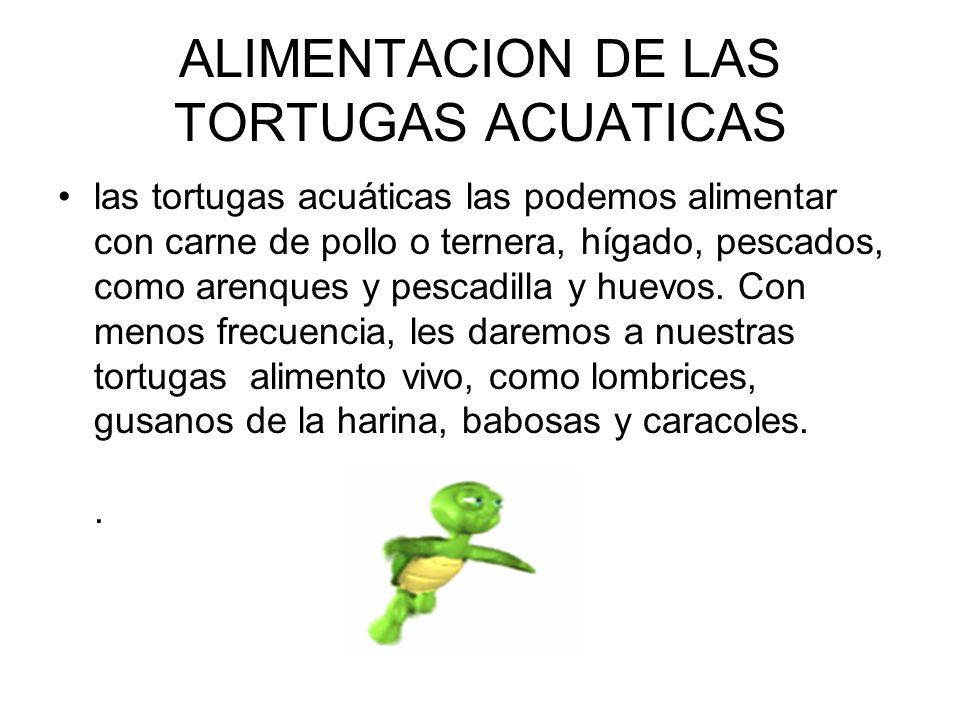 ALIMENTACION DE LAS TORTUGAS ACUATICAS