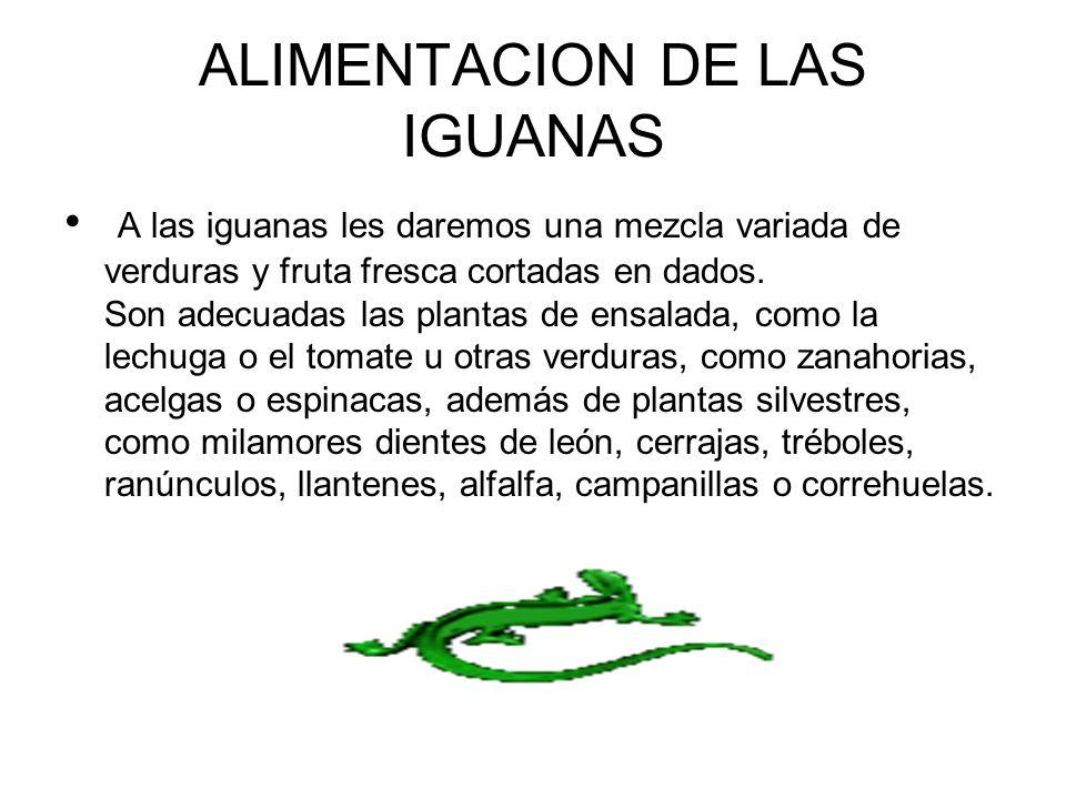 ALIMENTACION DE LAS IGUANAS