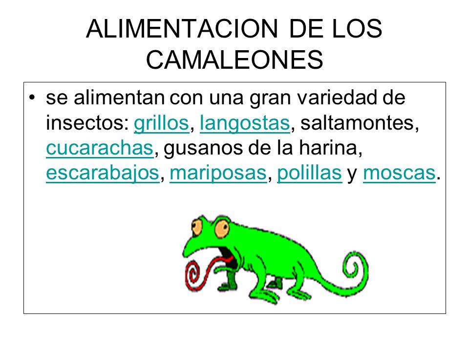 ALIMENTACION DE LOS CAMALEONES