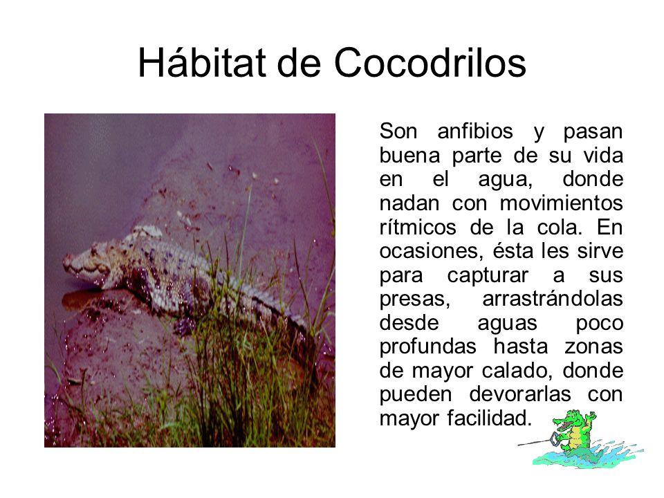 Hábitat de Cocodrilos