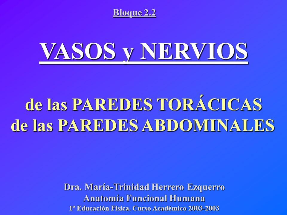 VASOS y NERVIOS de las PAREDES TORÁCICAS de las PAREDES ABDOMINALES