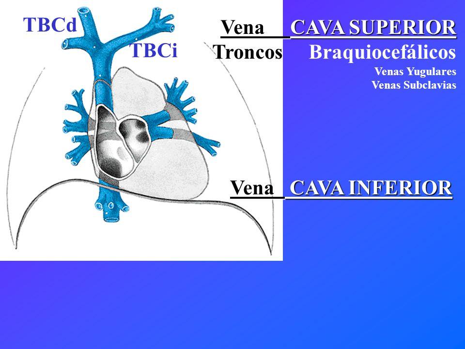 Vena CAVA INFERIOR TBCd TBCi