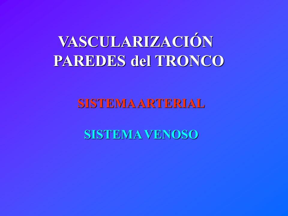 VASCULARIZACIÓN PAREDES del TRONCO
