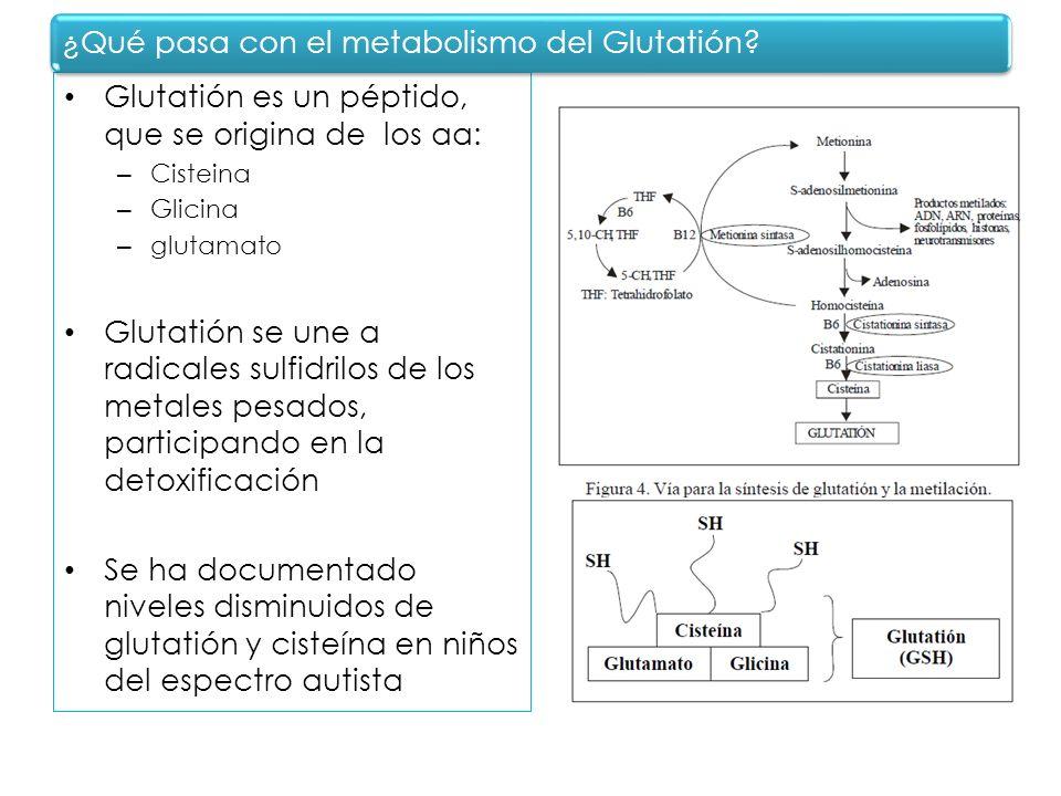 ¿Qué pasa con el metabolismo del Glutatión