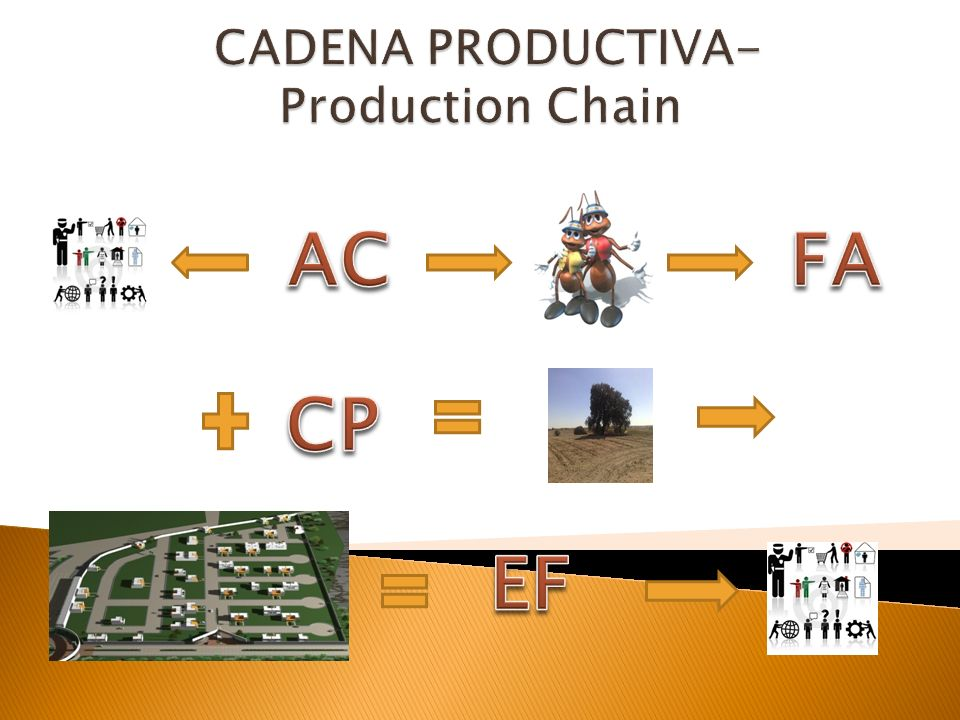 CADENA PRODUCTIVA-Production Chain