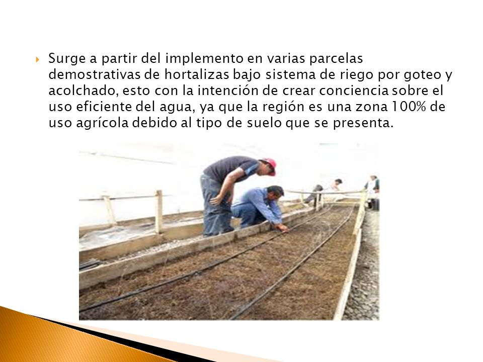 Surge a partir del implemento en varias parcelas demostrativas de hortalizas bajo sistema de riego por goteo y acolchado, esto con la intención de crear conciencia sobre el uso eficiente del agua, ya que la región es una zona 100% de uso agrícola debido al tipo de suelo que se presenta.
